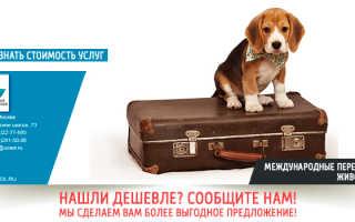 Транспортные перевозки животных